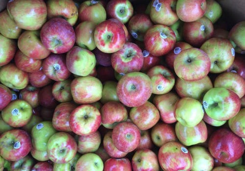 Click to view more Apples Produce