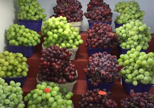 Red and Green Seedless Grapes For Sale