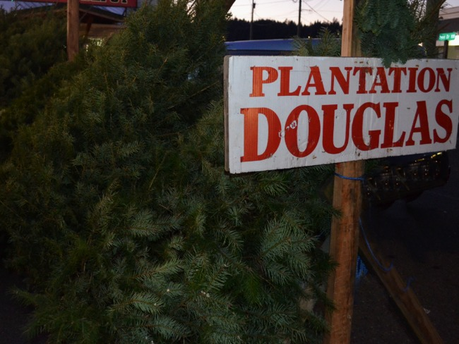 Plantation Douglas Fir Christmas Trees