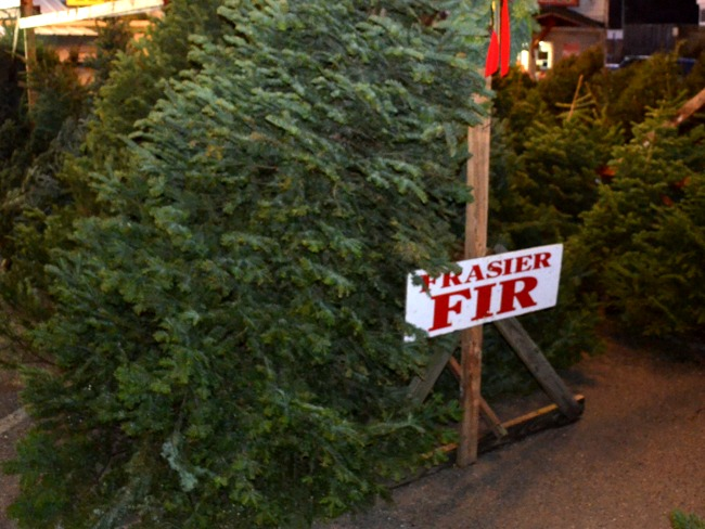 Frazier Fir Christmas Trees