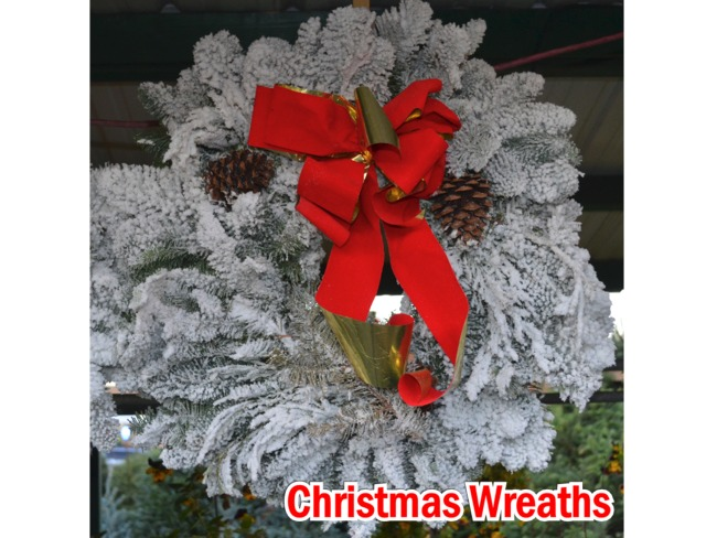 Flocked Christmas Wreaths