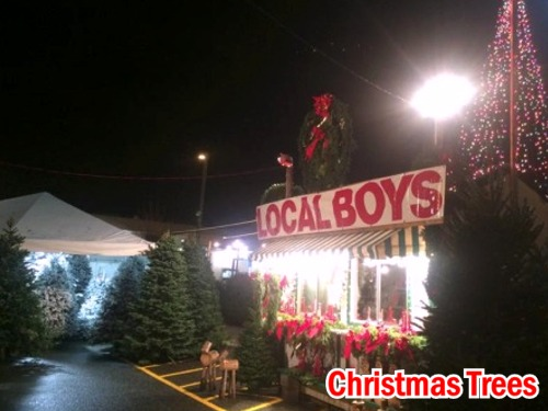 Click to view more Christmas Trees Seasonal Holiday Items